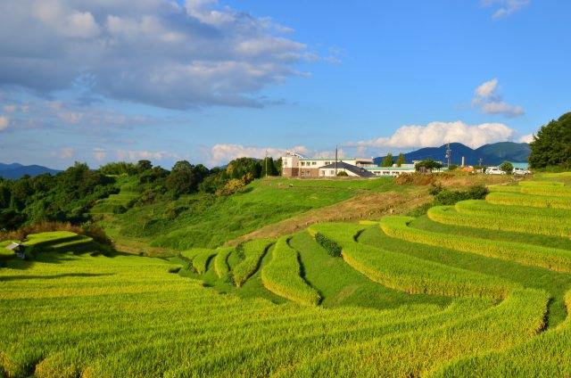 ふるさとの田園風景