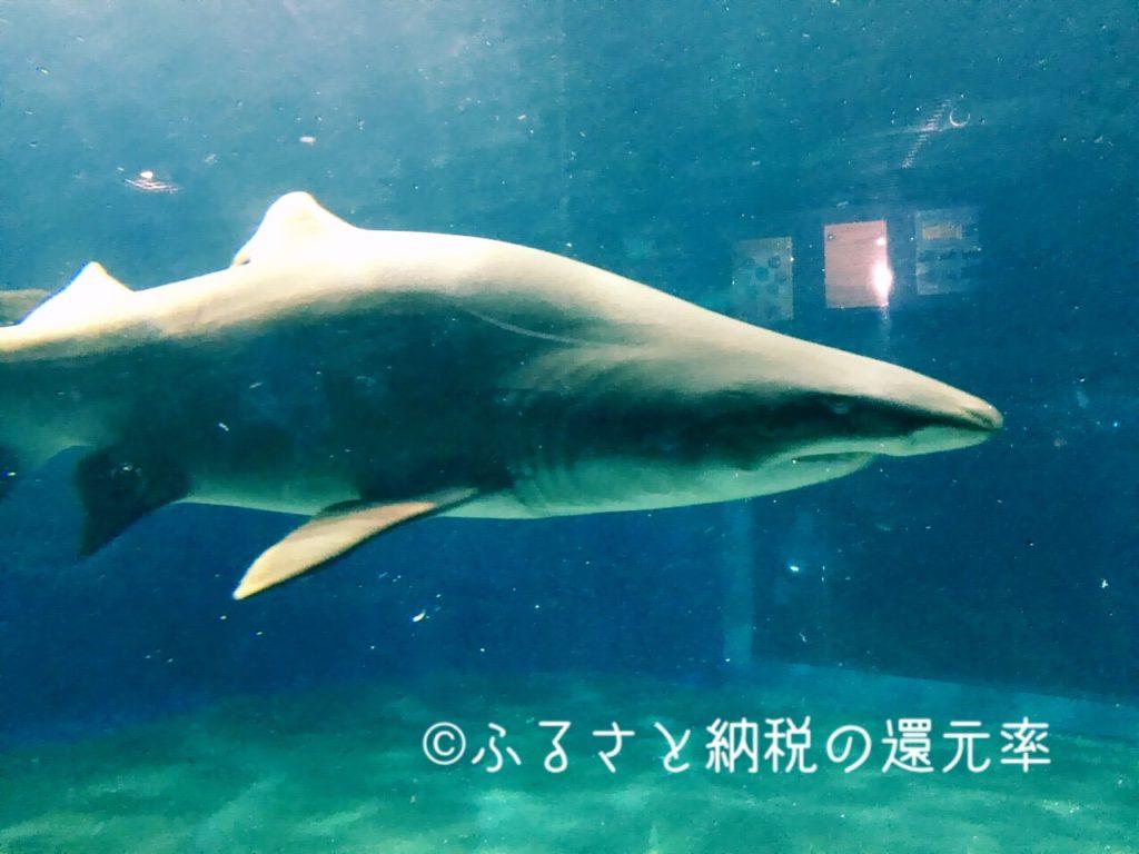 サメも見どころ
