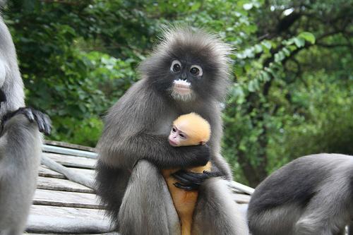 世界のお猿さん