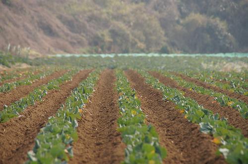 自給自足の一歩。農業体験をしよう