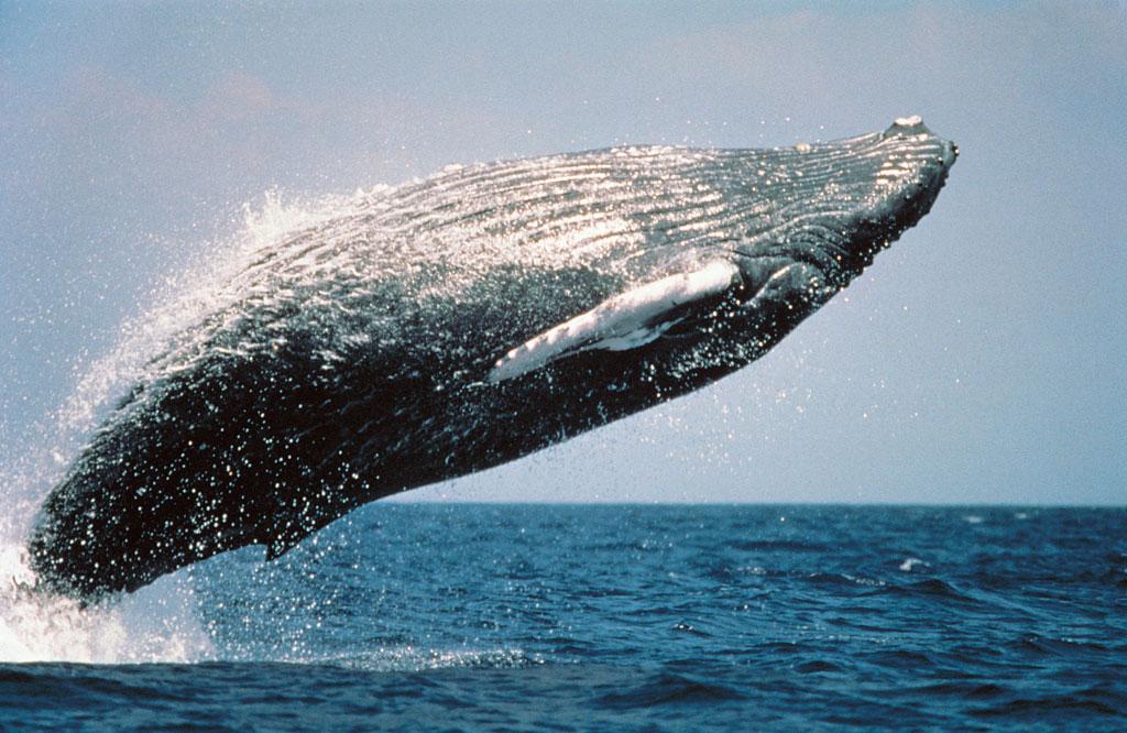 南房総のクジラ漁は400年の伝統があります