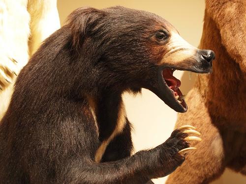 うわー!!!!熊に食べられてます